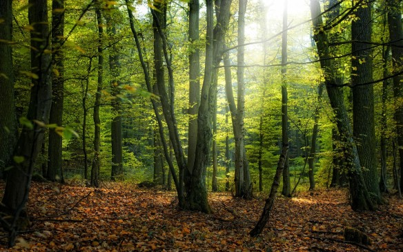 Beautiful-Forest-in-Morning